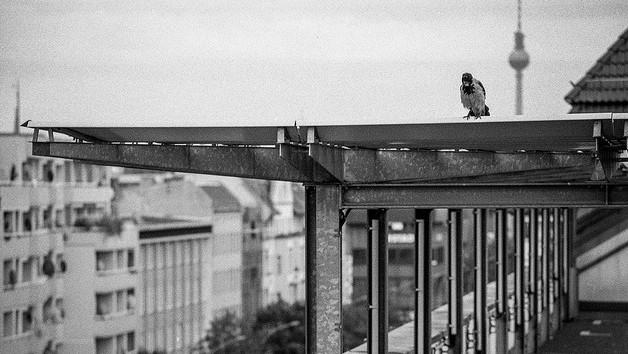 """Sehen die Welt von oben: Tauben im Wedding. Foto: """"Nimmermehr!"""" von Dennis Skley via flickr"""
